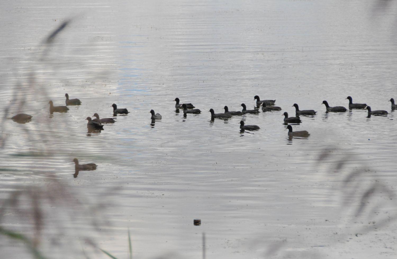 Lac de Madine, Meuse - Blog La Marinière en Voyage